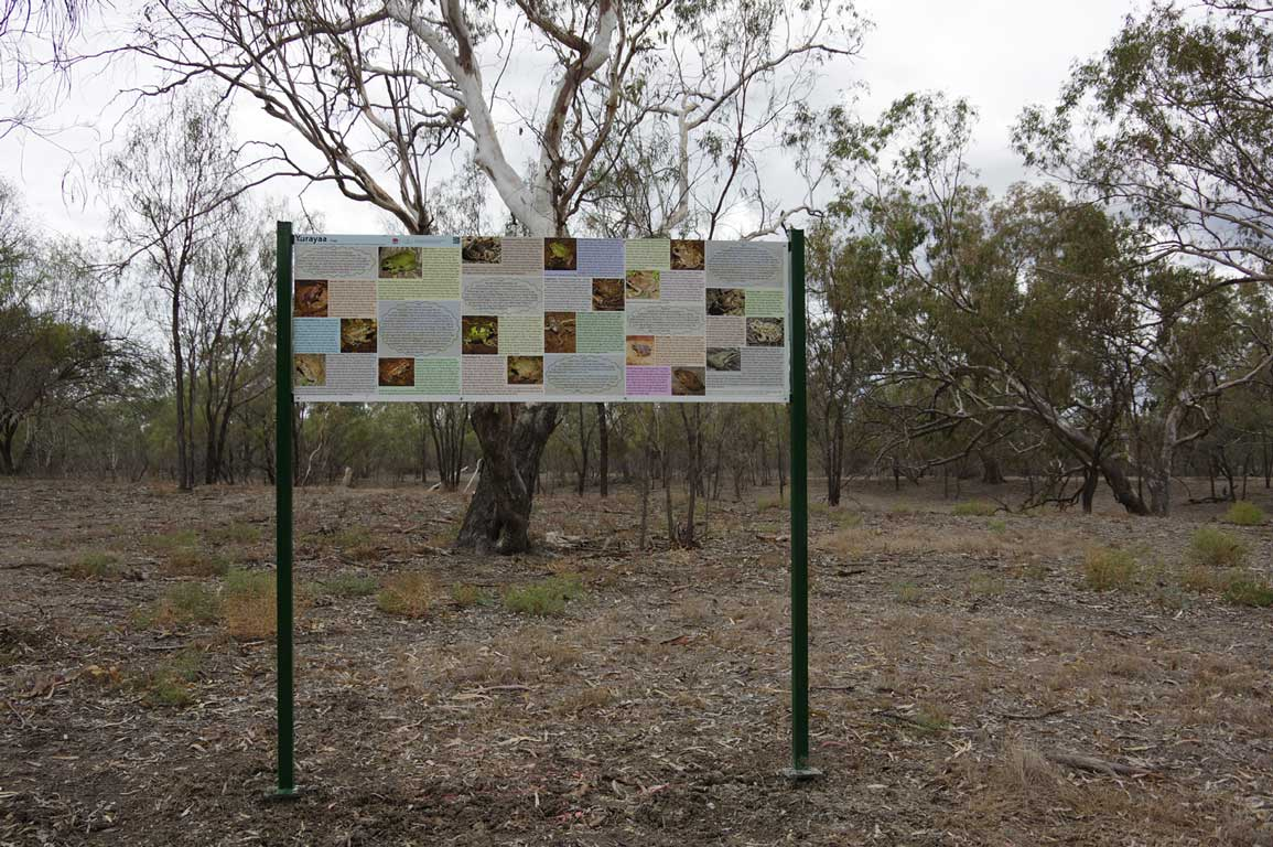 Information presented of some of Walgett's frogs