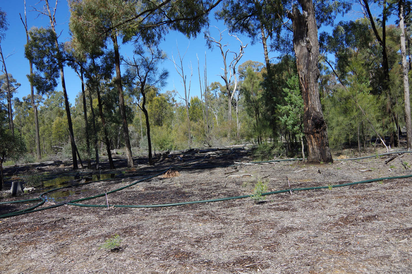 Bohena Bore spill site Pilliga Forest